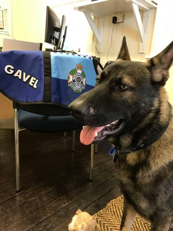 Gavel The Dog