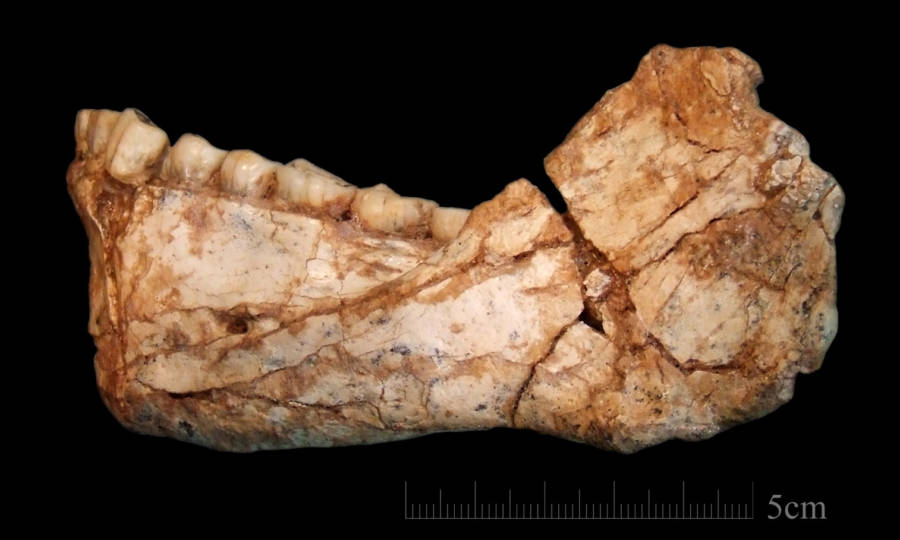 Oldest Homo Sapien Fossils Ever Found