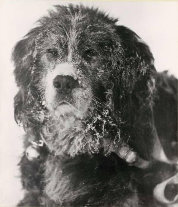 Shakespeare Shackletons Dog