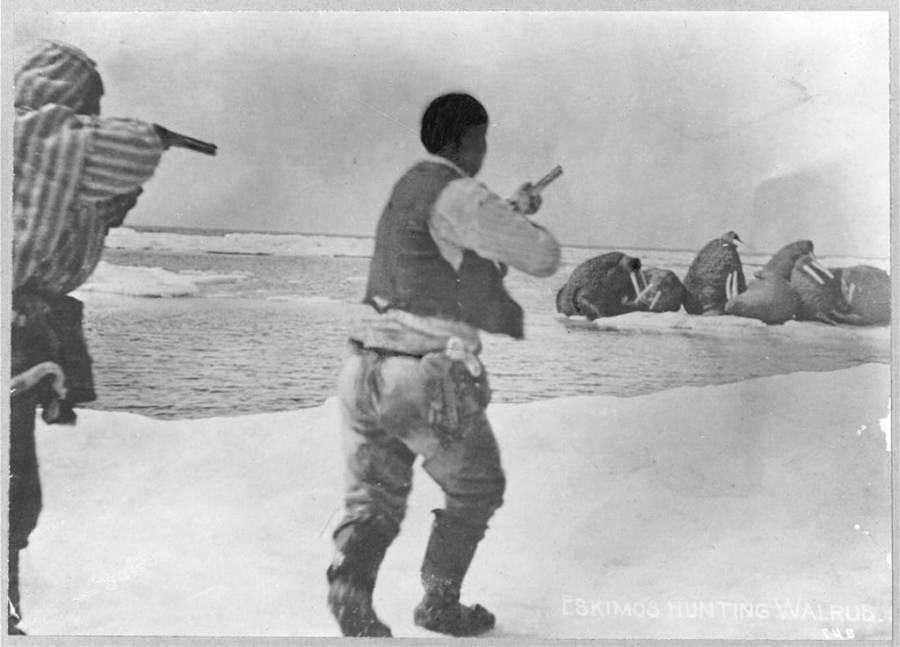 Alaska Eskimos Hunting Walrus