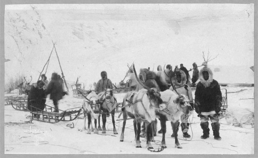 Alaskan Reindeer Team