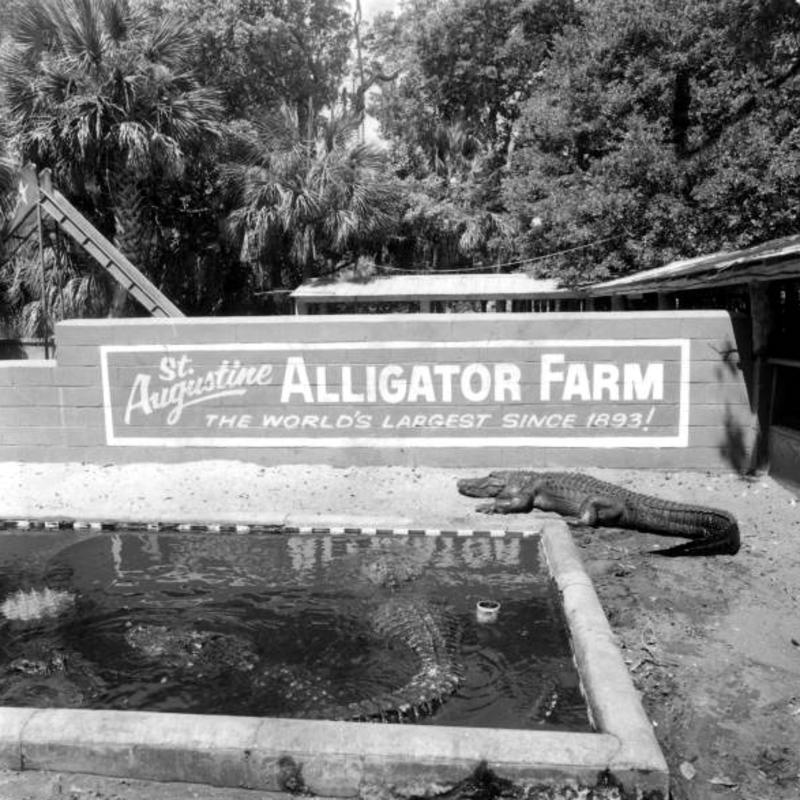 Alligator Farm Sign