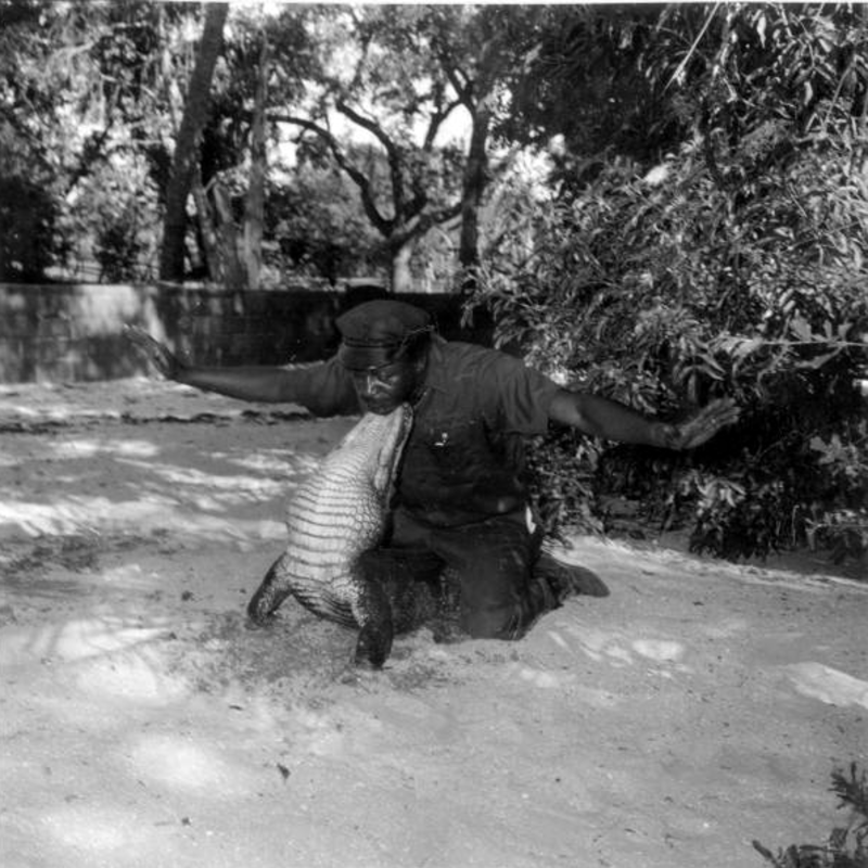 Alligator Farm Trick