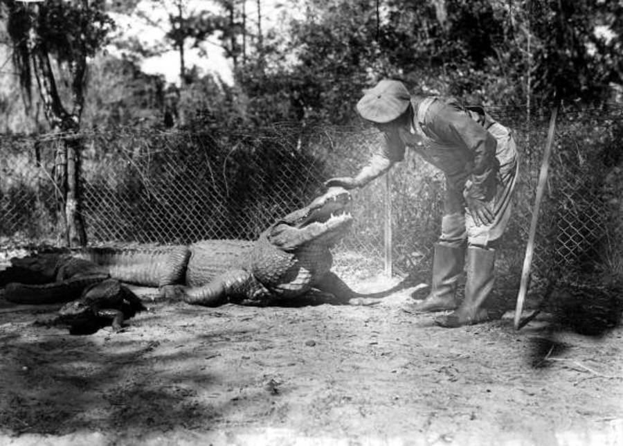 Alligator Farms Guide Fence