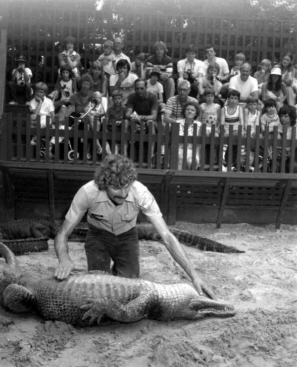 Alligator On Its Back