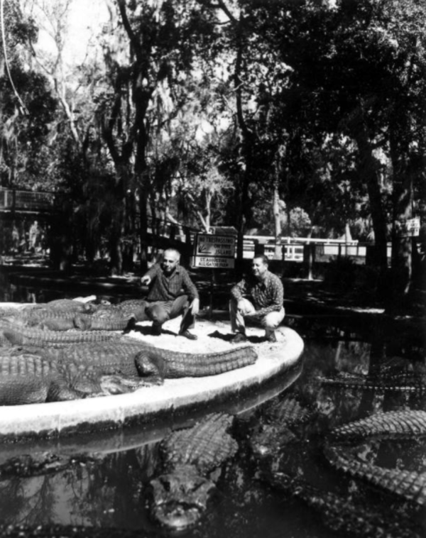 Alligator Ostrich Farm