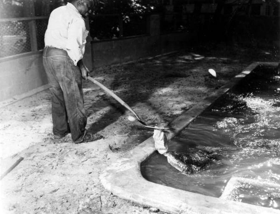 Alligators Trainer Man