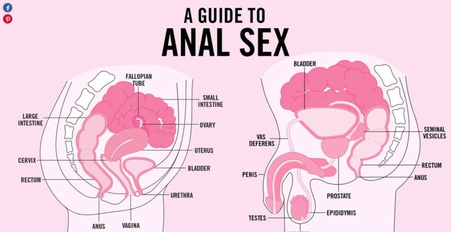 Anal sex man and woman diagram