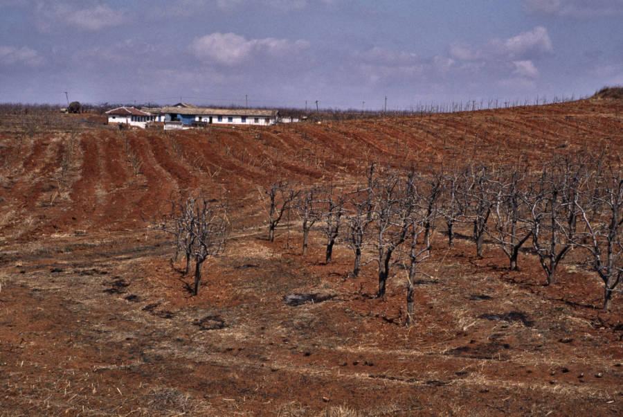 Arid North Korean Farmland