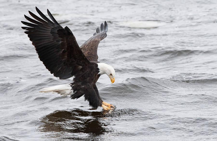 Bald Eagle Atv