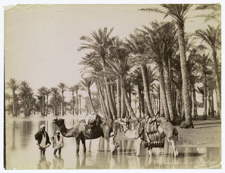 Bedouins Camels The Nile