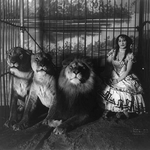 Cage Adjie Lions