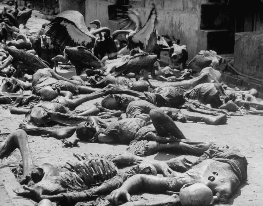 Calcutta Dead Vultures
