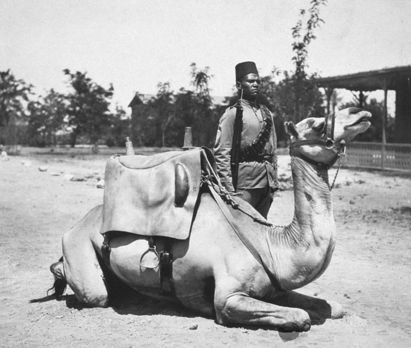 Camel Soldier