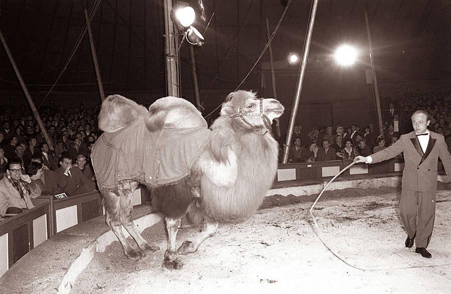 Camel Trainer