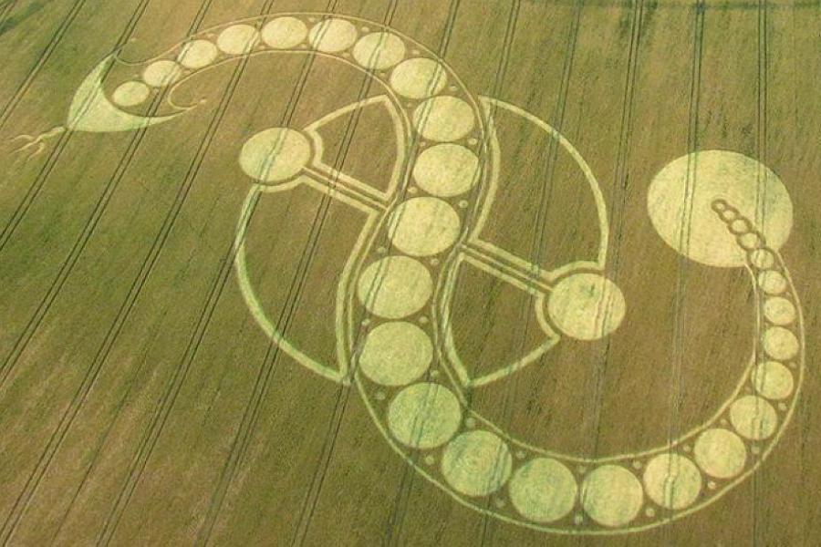 Serpent Design In Crops