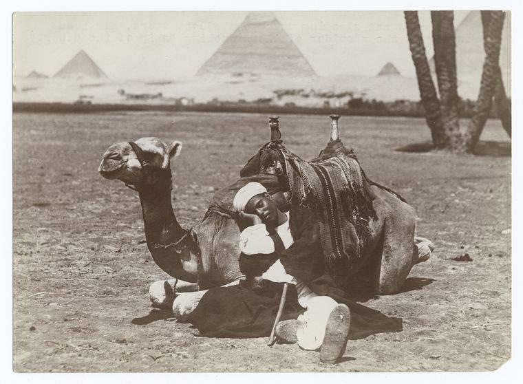 Dragoman Sleeping With Camel