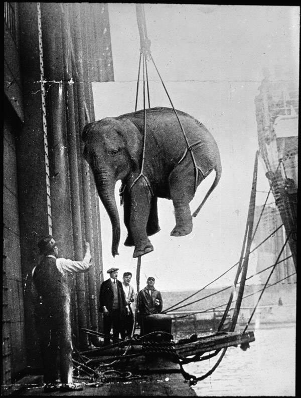 Elephant Lift