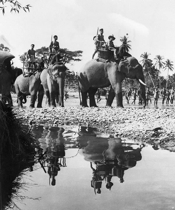 Elephant Tanks