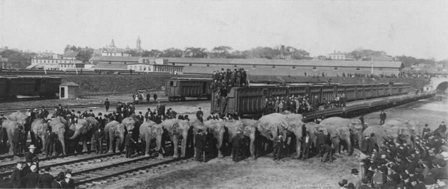 Elephants Trains