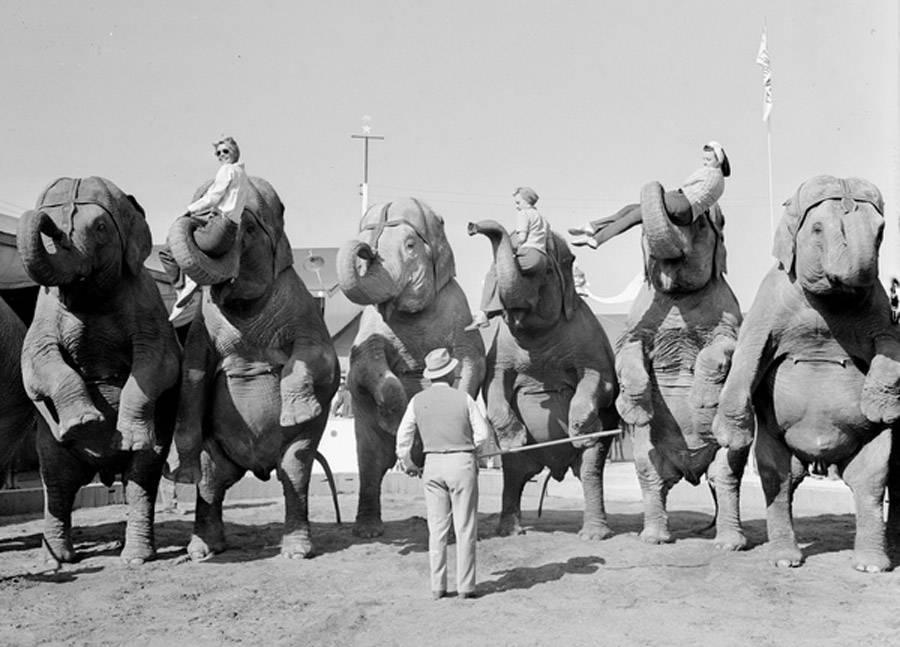 Elephants Women