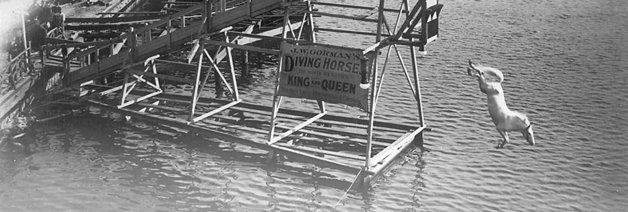 Featured Horse Diving