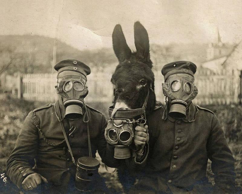 Gasmask Donkey