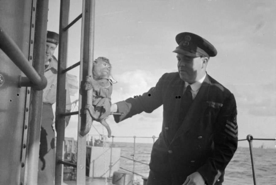 Navy Monkey