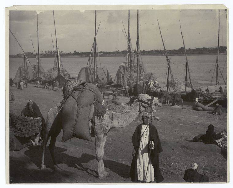 Nile Camel And Boats