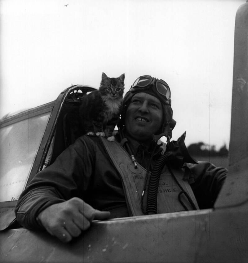 Pilot Cat