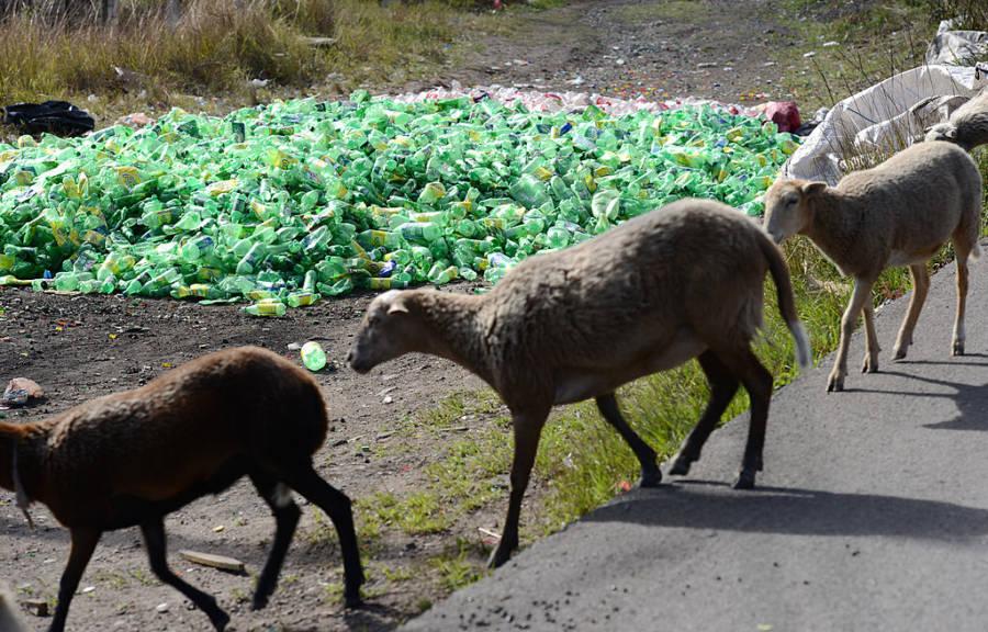 Plastic Sheep