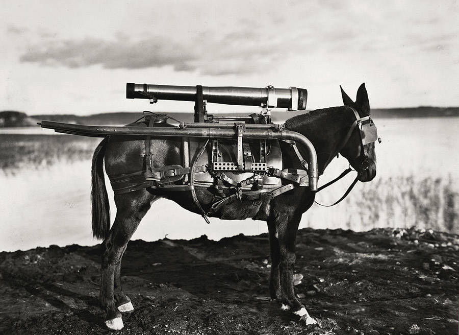 Rocket Donkey