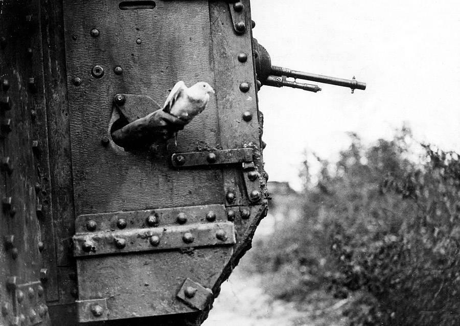 Tank Pigeon