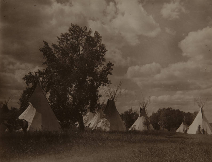 Tepees And Trees