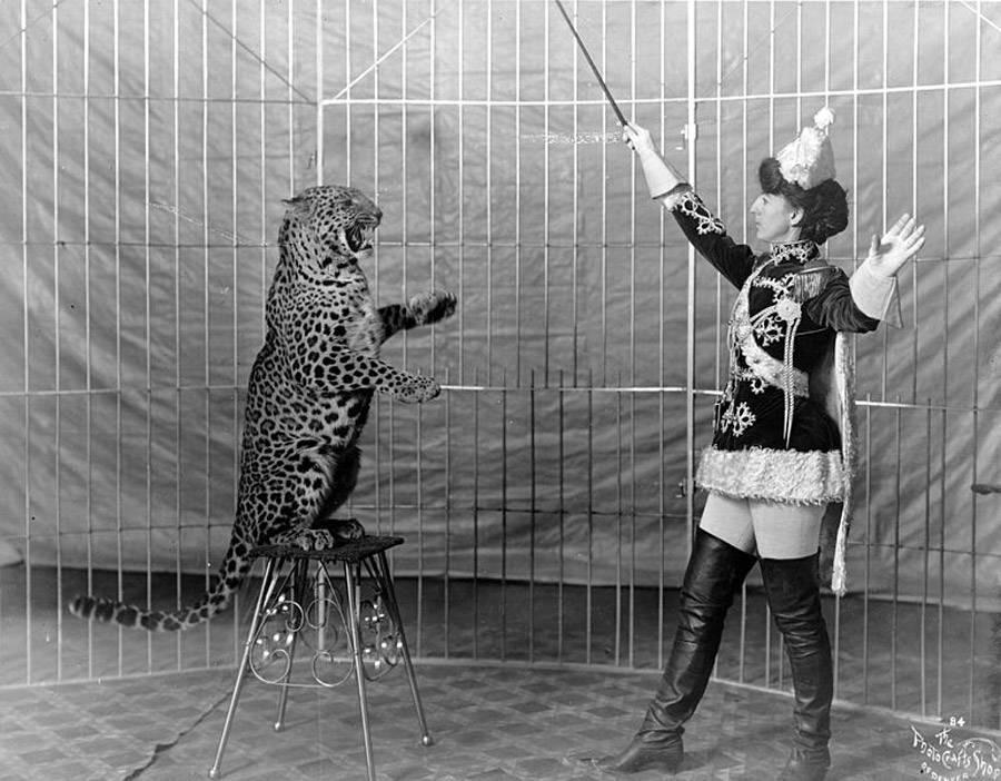 Trainer Leopard