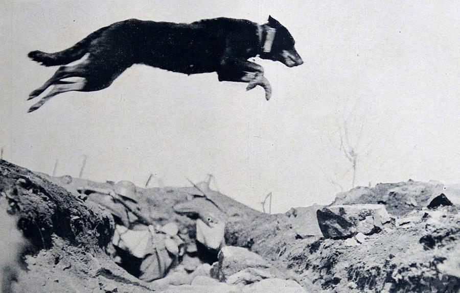 Trench Dog