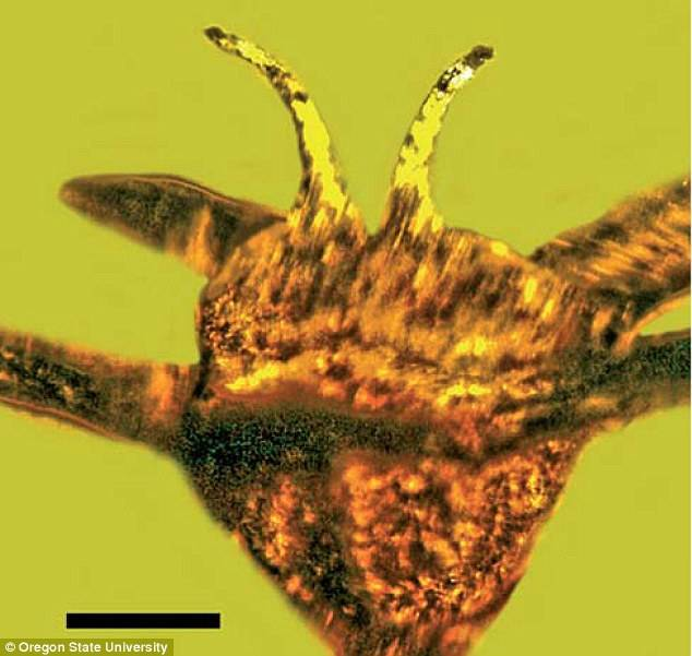 Amber Flower Closeup