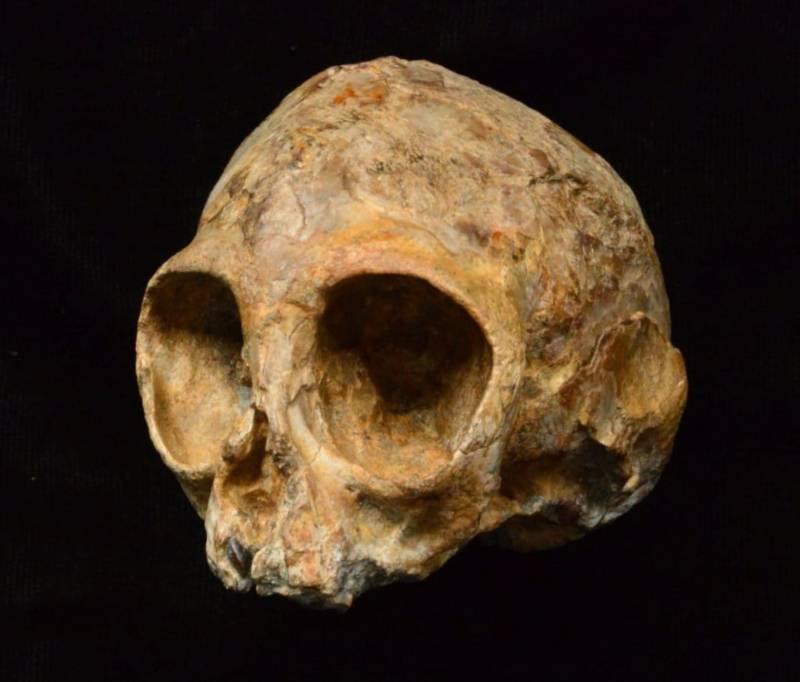 Ancient Baby Skull