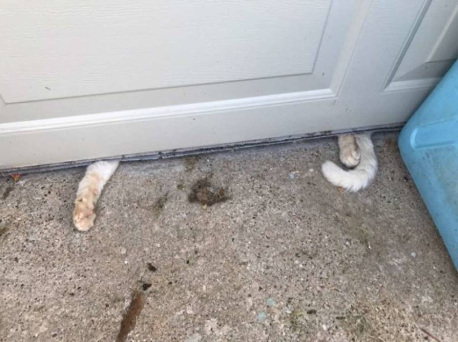 Animal Cruelty Paws