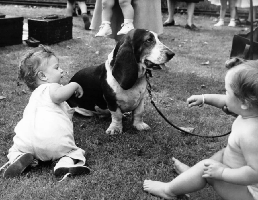 Babies With A Dog