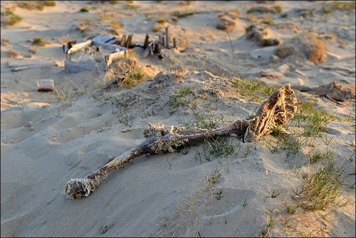 Bones On Ground