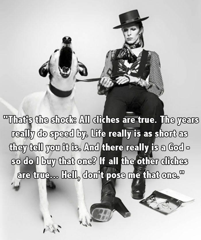 Bowie Dog Hat