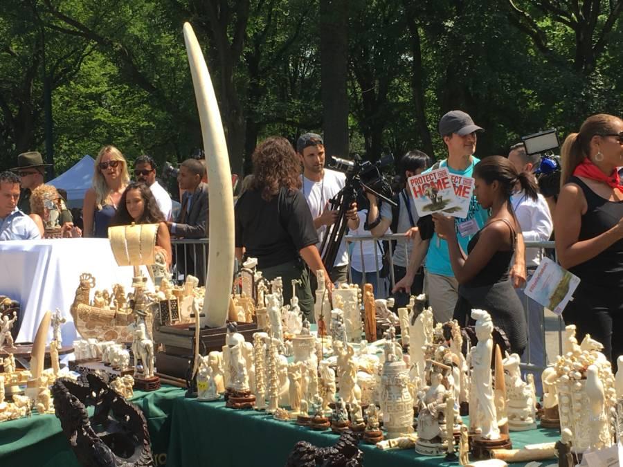Central Park Ivory Crush