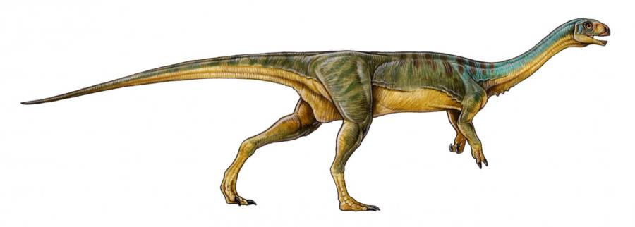 Chilesaurus Full