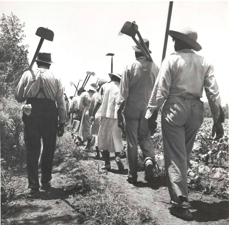 Cotton Workers Headed Off