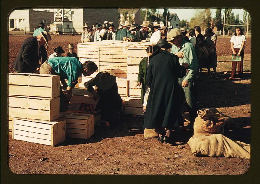 Distributing Surplus Commodities Scavengers