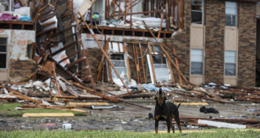 Are Rescues Helping The Dogs Left During Hurricane In Texas
