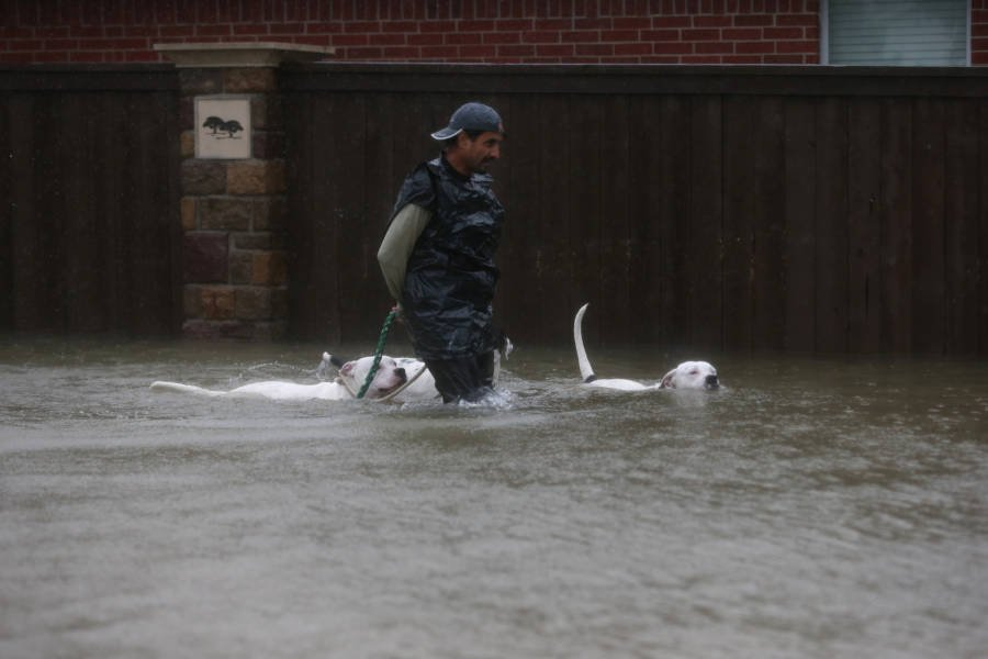 Dog Harvey Hurricane