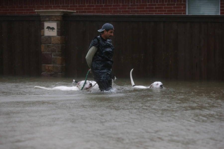 Dog Harvey Hurricane