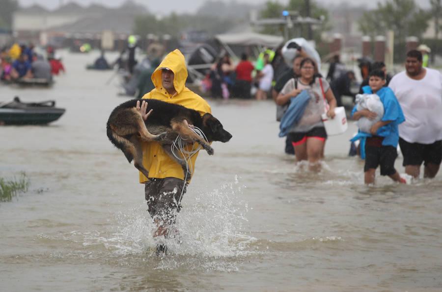 Dog Harvey Yellow Poncho